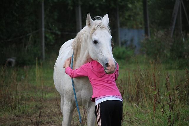 objímání koně