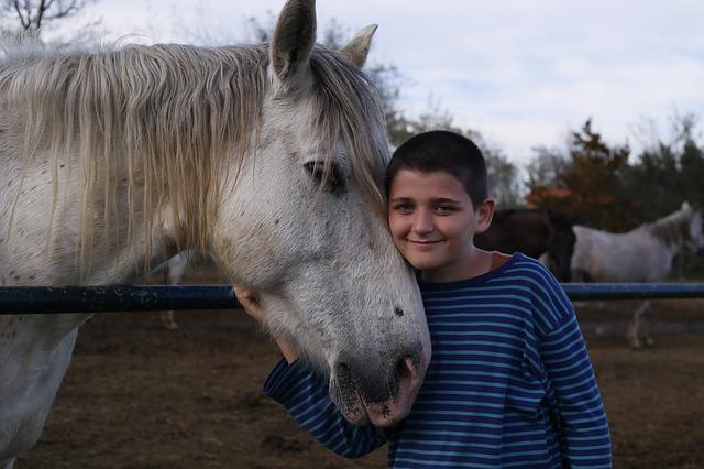 kůň a chlapec