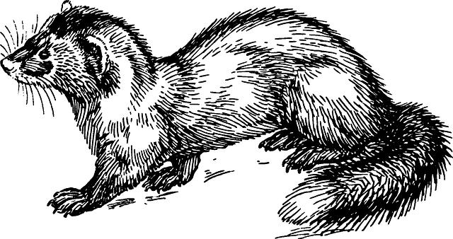 malovaná kuna