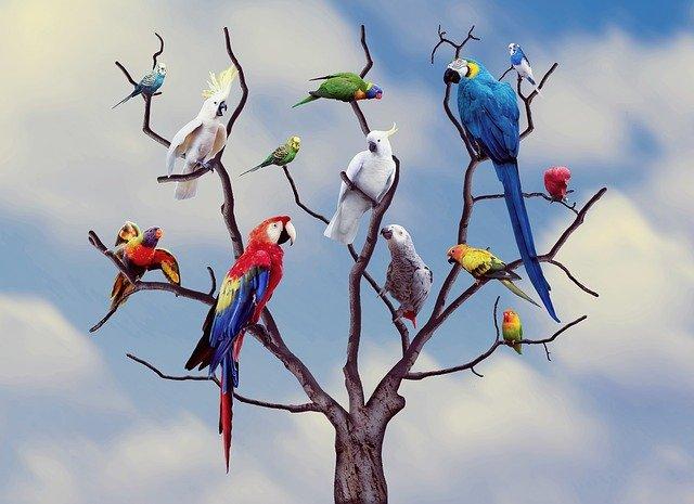 papoušci na stromě
