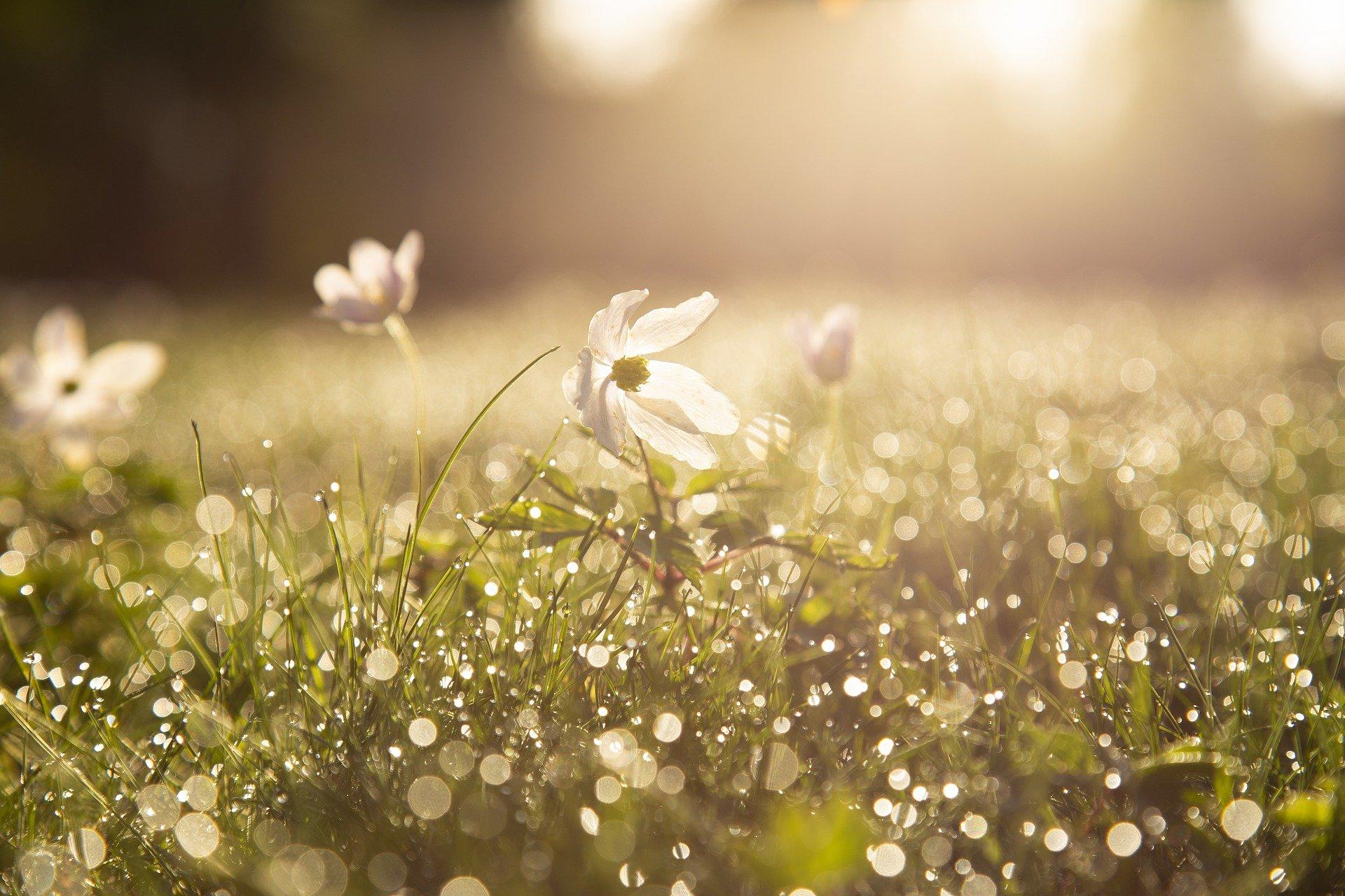 květina na zahradě